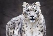 Wonderful Wildlife...