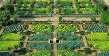 Bedford - Vegetable Garden