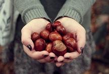 Autumn: my favorite season / by Doody Mac
