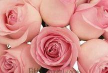 Preya's September wedding / Flowers for a September wedding with a Jane Austen theme.