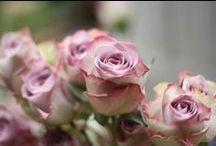 Alice's July wedding / Flowers for Alice's July wedding