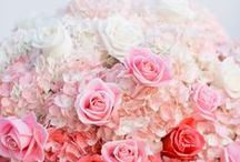 Michelle's August wedding / Ideas for a romantic / luxe wedding.