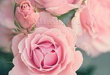 Flowers for Bianca and Scott / August flowers for an Ardington wedding