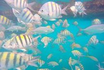 Scuba Diving / Scuba Diving, the ocean, the beach and all the magnificent underwater creatures!