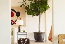Decor: Living Room / by Danielle Alcock