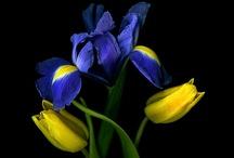 Flowers / by Lisa Eads