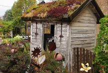 Flowers & Garden Ideas