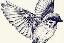 :: Birds ::