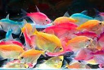 aquarium / by Nairim Brito