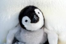 Penguins are cute / by Eva