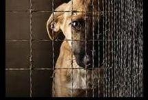 Animal Activism!