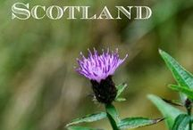 Planning a trip to Scotland! / Places of interest and articles to read about the country. To use while planning a trip to Scotland.