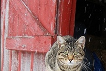 Cats / by Trudy Honeycutt ~ Crows in the Attic Primitives
