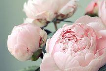 flowers/indoor plants