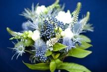 Something Blue Wedding / Something Blue Wedding Scheme