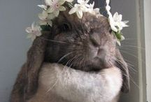 Bunnies & guinea pigs... / everything bunnies and guinea pigs.