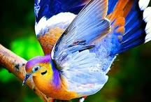 BIRDS  BIRDS  BIRDS / ANY & ALL KINDS OF BEAUTIFUL BIRDS / by Jackie Walmer