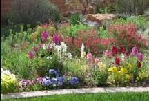 Gardens / by Oranna Adams