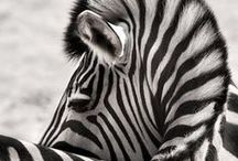Amazing pet & wild life photography... / awesome images found around the web or shared with us so that we can share on...