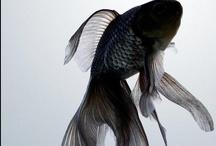 .:352p1fish:.