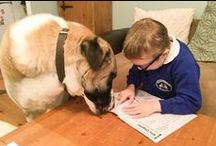 Assistance dogs... / working assistance dogs spend years in training to ensure they are ready. They are the most wonderful helpers and form an extremely strong bond with their people.