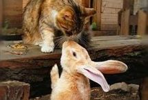 Hugs & Kisses - animal attraction / Animals love to share tender moments, just like people