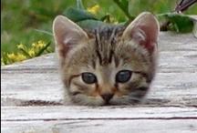 Kitty Litter / Baby kittens