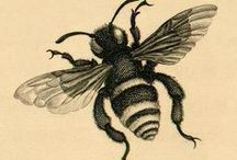 Bee Fabulous / Anything and everything pertaining to bees! / by Dara Inman