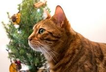 Christmas... / It's all about Christmas and the animals...