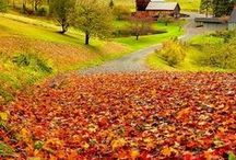 Autumnal Awe / The colours of Autumn (Fall)