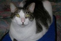 Fur Kids That need a Loving Home.or Fosters. / pet adoption / by Judith 9848