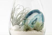 Terrariums / Terrariums are basically just a glass container used for keeping plants indoors.  They can have different rock, bark and moss components.  Generally speaking one uses ferns or succulent in terrarium landscapes.