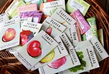Non-GMO & Heirloom Seeds / Heirloom seeds or seeds that come from open-pollinated plants protect the genetic diversity of your plants. By using heirloom seeds you are making sure that you will have a genetically diverse garden.