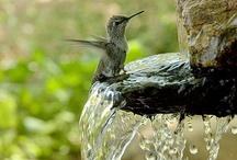 love HUMMINGBIRDS / by Yolonda Haskins
