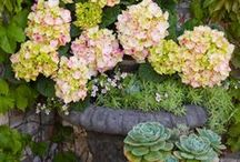 Charming Container Gardens / Different planting ideas for any time of year.  Even in the dead of winter, there are beautiful combinations of flowers and shrubs to make your entry or patio inviting.