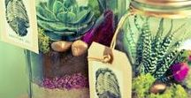 Green Thumbing Gifts for Mom / Flower and gardening ideas for CA moms who have a green thumb.