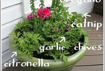 Mosquito Beaters / Everyone has heard of Citronella, but there's many more options.  We get questions on a daily basis about what plants deter mosquitoes...we have ideas that can help.
