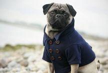 Doggie Dos / by Jasmine Vidal