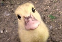 i like cute animals