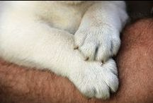 Puppies : my wish list....... / by pepastoys
