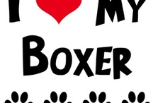 Boxers / by Maria Swanson