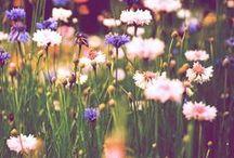 Natural beauty ♥ / by Kasandra Louise