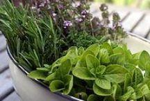 Cuisine : Herbes & épices