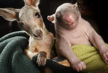 Incredibly Cute Animals / by Maggi Shelbourn