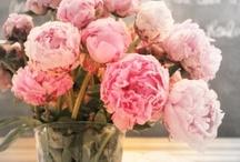 Flowers/Plants / by Jill Cobbs