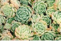 Succulent Life / Living a rich, full life no matter the weather. Make living an art; that is the goal.
