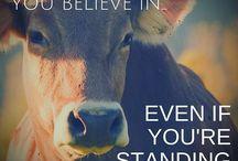 Cruelty FREE  / Animal Welfare.