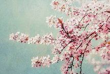Floral / Flowers, floral design / by Karin P