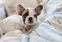 i want one!!!!! / by Anna Lenderman