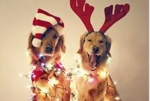 jingle bells//